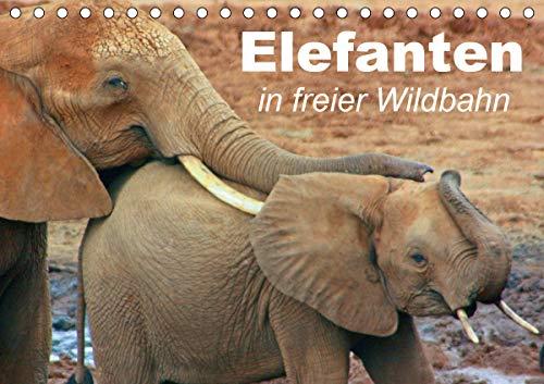 Top 10 Elefanten Rüssel – Alben