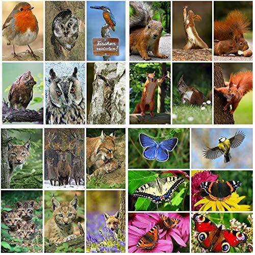 Top 9 Vögel Europas – Postkarten